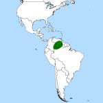 Heliamfora sarracenioides